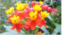 post-flowers